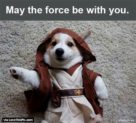 May The Force Be With You Funny Dog Pictures, Photos, and ...