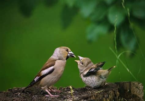 BROKASTU LAIKS Publicēja Anita Stukāne | Animals, Popular