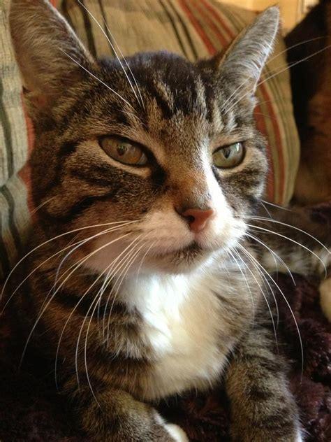 Katze Mit Niereninsuffizienz Frisst Nicht Mehr