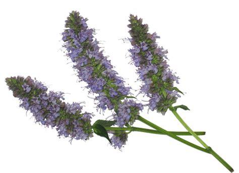 herb florist microgreens in mixology freshorigins com