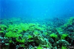 Image Gallery ocean algae