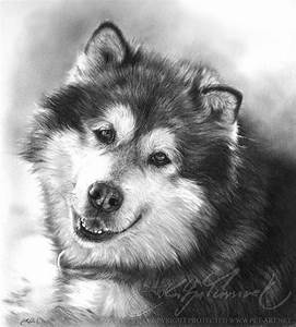 17 Best Images About Alaskan Malamutes On Pinterest
