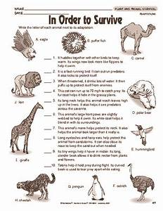 Results for animal adaptations   worksheet   Guest - The ...