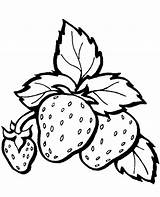Coloring Strawberries Strawberry Topcoloringpages Fruits Fruit sketch template