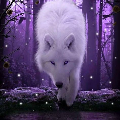Blue And Purple Wolf Wallpaper by Pin On Purple