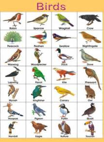 Wild Animals Chart with Names