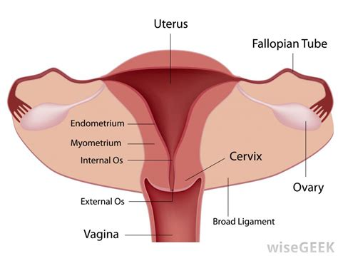 Irregular Shedding Of The Uterine Lining by What Is Female Sterilization With Pictures