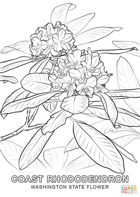 washington state flower coloring page  printable
