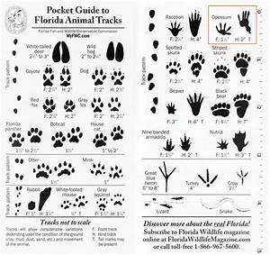 florida animal tracks identification - Google Search ...