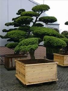 Gartenpflanzen schlegel baumschulen for Garten planen mit bonsai lebensbaum kaufen
