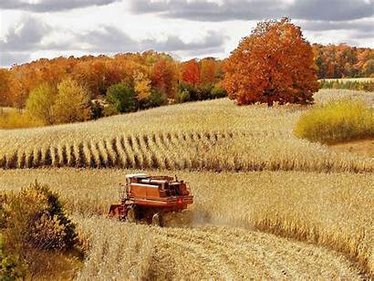 Harvest Fall Wallpapers Corn