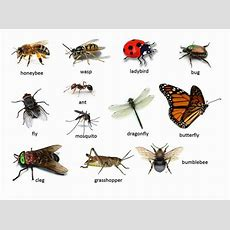 Stepglishforward Learning English Language And Culture Animals And Insects