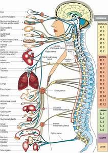 Relational Organs And Possible Diseases  U2013 Al