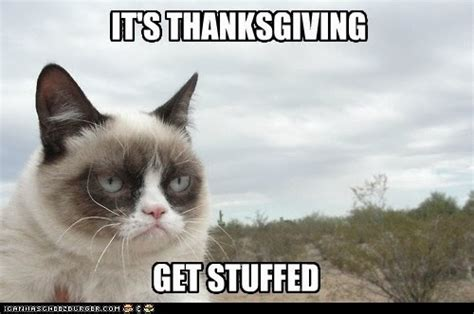 Thanksgiving Cat Meme - cat thursday thanksgiving cat is thankful