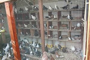 Fabrication D Une Voliere Exterieur : nouveau pigeonnier pigeon ~ Premium-room.com Idées de Décoration