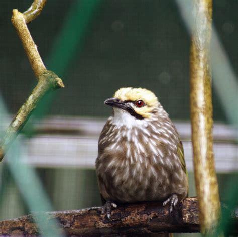 Beberapa jenis burung sendiri merupakan jenis yang sangat. Gambar Burung Langka Dan Namanya - Gambar Burung