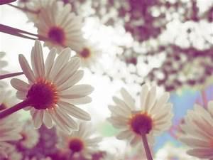 cute flowers on Tumblr