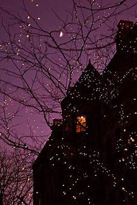 Fairy, Lights, Pictures, Photos, And, Images, For, Facebook, Tumblr, Pinterest, And, Twitter