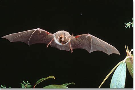 kentucky department of fish wildlife small mammals and bats