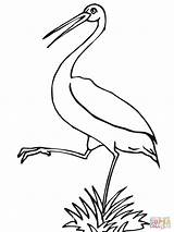 Stork Coloring Pages Printable Storks Wood Leg Baby Version Clipart Boy Getcoloringpages Tablets Compatible Ipad Android Library Supercoloring Categories 1600px sketch template