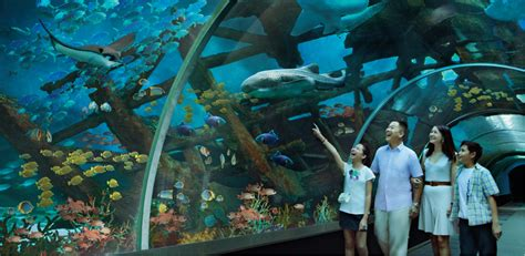 s e a aquarium family annual pass bundle at sgd272 save 12 promotions resorts world sentosa