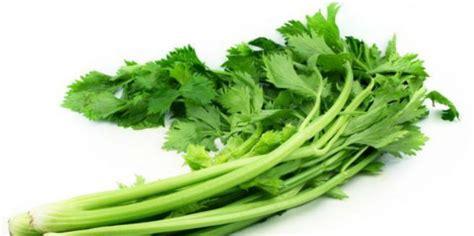 image gallery sayuran