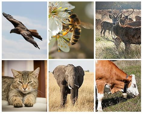 diurnal animals nocturnal between difference examples vs definition