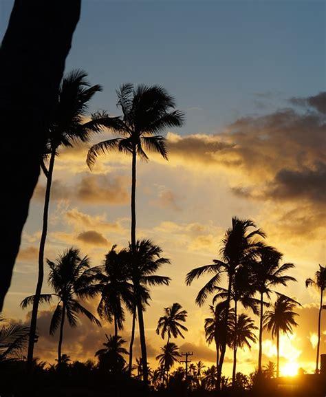 foto gratis paisagem coqueiro por  sol ceu imagem