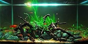 Aquarium Dekorieren Ideen : aquarium einrichtung sorgt f r das wohlf hlen der wassertiere ~ Bigdaddyawards.com Haus und Dekorationen
