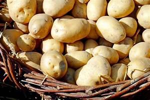 Kann Man Rhabarber Roh Essen : kann man kartoffeln roh essen pro und contra wiressengesund ~ Eleganceandgraceweddings.com Haus und Dekorationen