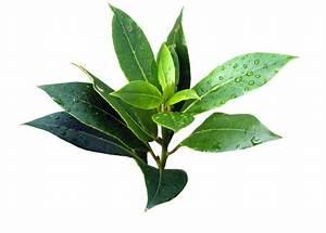 Green, tea, oil, free toner