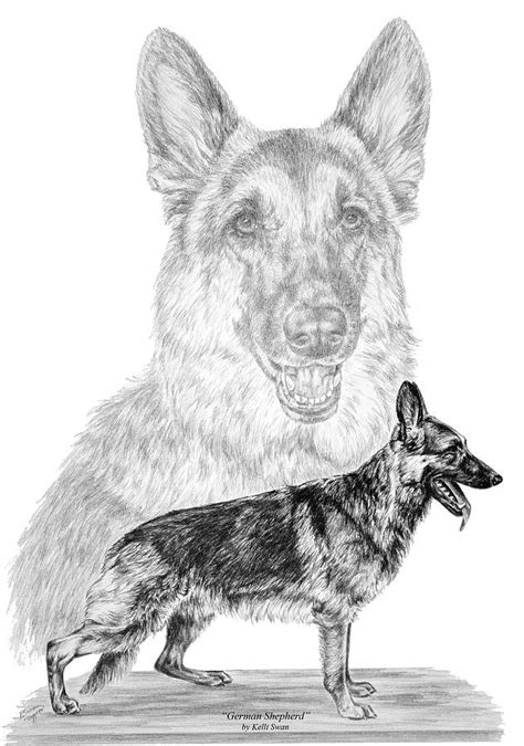 german shepherd dogs print drawing  kelli swan
