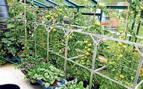 What To Grow In A Greenhouse In Winter