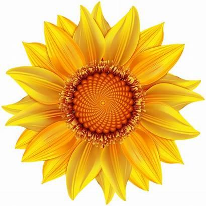 Yellow Flower Clip Transparent Clipart Flowers Background