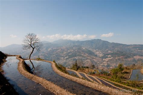 yuanyang rice terraces yuanyang rice terrace in photos xinjie yunnan province