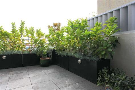 Pflanzen Sichtschutz Im Garten by Bambus Pflanzen Als Sichtschutz Terrasse Pflanzen