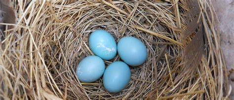 Be on the lookout for bird nests. Birds can pick the strangest places to… | by U.S. Fish and ...
