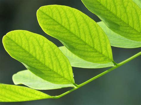 images gratuites arbre branche lumiere feuille fleur