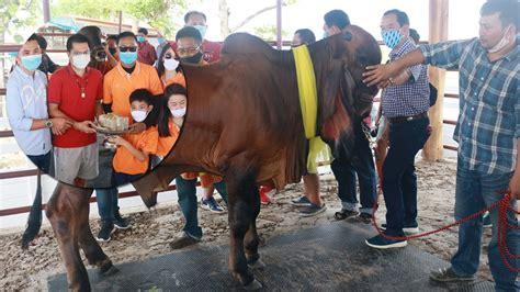 วงการวัวคึกคัก ปลัดโหนกควักกว่า 2 ล้านซื้อวัวฮินดูบราซิล แพงสุดในประเทศไทย!