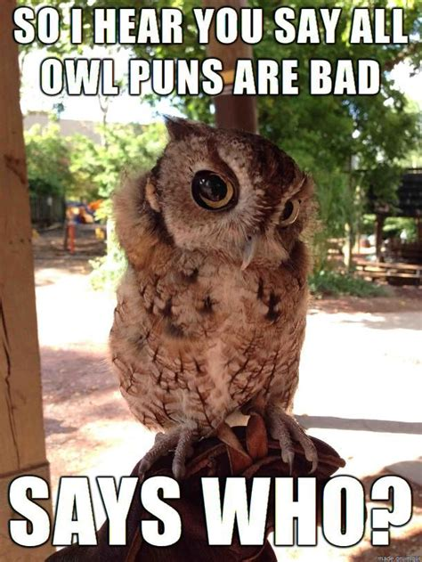 Owl Who Meme - 13 best images about owl puns on pinterest discover more ideas about the end owl cupcakes