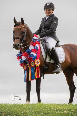 Skats Magnum Star - Stallion Profiles|The Eastern Crabbet Arabian Horse Society