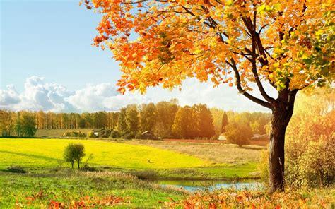 Beautiful Tree Wallpaper For Desktop is better with a single tree green tree