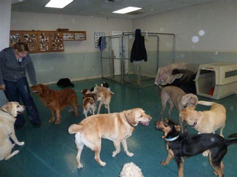 doggy haven resort   bothell washington wa