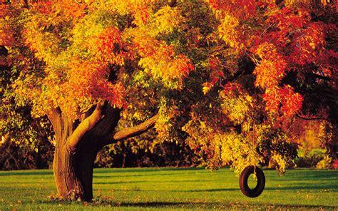 tree in fall descarga imagenes de paisajes para fondo de pantalla en 3d fondos de pantalla en movimiento