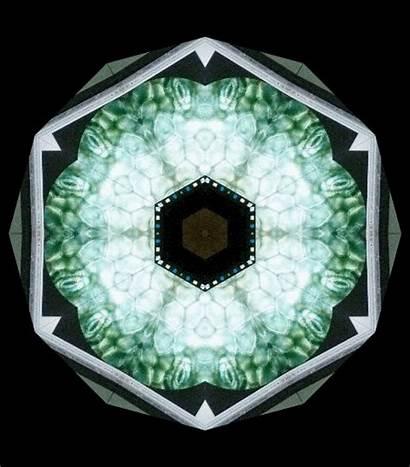 Plant Stomata Cells Leaf Microscope Microworld Wonderful