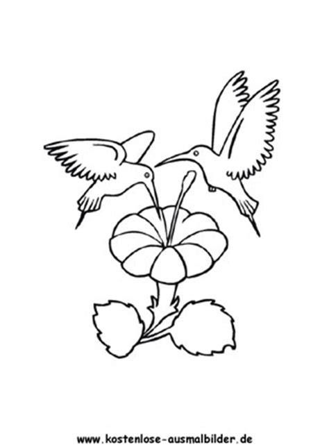 ausmalbilder malvorlagen kolibri
