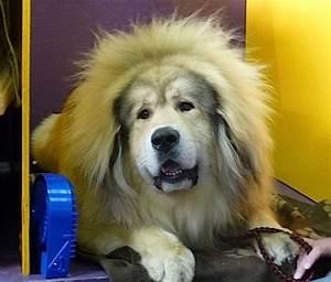 Top 10 Crazy Cool Dog Breeds - Care.com