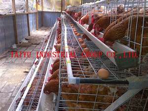 TAIYU 2014 New Design Chicken Egg Layers Cages for Poultry ...