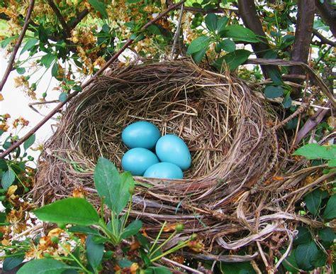 robin s eggs musings from the writer s desk