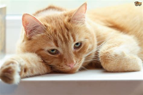 cat not pooping after deworming